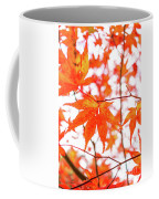 Fall Color Maple Leaves At The Forest In Kumamoto, Japan Coffee Mug