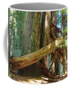 Fallen Redwood Trees Forest Coffee Mug