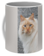 Fat Cats Of Ballard II Greeting Card Coffee Mug
