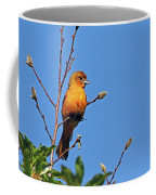 Female Baltimore Oriole Coffee Mug