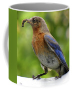 Female Bluebird Feeding Her Brood Coffee Mug
