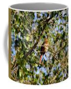 Female Cardinal IIi Coffee Mug