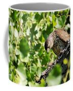 Female Cooper's Hawk Feeding Coffee Mug