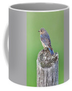 Female Eastern Bluebird 4479 Coffee Mug