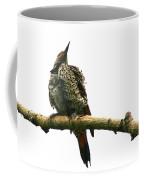Female Flicker Coffee Mug