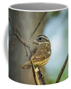 Female Grossbeak Looking Back Coffee Mug