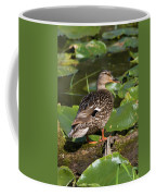 Female Mallard Among Lily Pads Coffee Mug