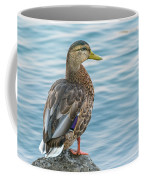 Female Mallard At The River Coffee Mug