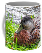 Female Mallard Duck Resting 4 Coffee Mug