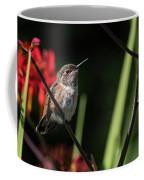 Female Rufous Hummingbird Coffee Mug