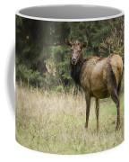 Female Wapiti Coffee Mug
