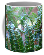 Fern Art Prints Green Sunlit Forest Ferns Giclee Baslee Troutman Coffee Mug