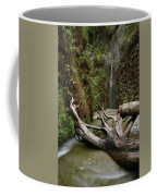 Fern Canyon Creek Coffee Mug