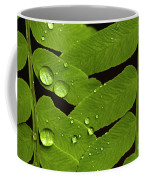Fern Close-up With Water Droplets  Coffee Mug