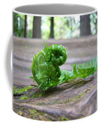 Fern On Big Redwood Tree Art Prints Baslee Troutman Coffee Mug
