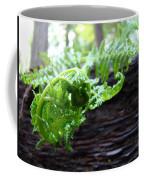 Fern On Redwood Tree Art Print Baslee Troutman Coffee Mug
