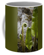 Fern Study At Blarney Castle Ireland Coffee Mug
