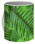 Ferns After A Spring Rain Coffee Mug
