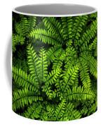Ferns After The Rain Coffee Mug