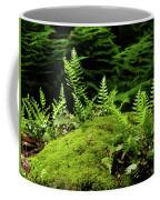 Ferns And Moss On The Ma At Coffee Mug