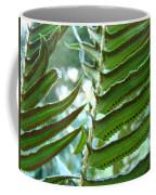 Ferns Art Prints Green Forest Fern Sunlit Giclee Baslee Troutman Coffee Mug