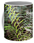 Ferns In Natural Light Coffee Mug