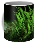 Ferns On The West Virginia At Coffee Mug