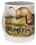 Ferret Coffee Mug