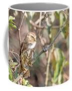 Ferruginous Pygmy-owl Coffee Mug