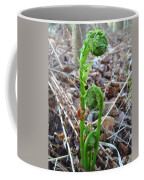 Fiddlehead Ferns In Spring Coffee Mug