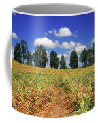 Fields Of Chopped Flowers At Nir Banim Coffee Mug