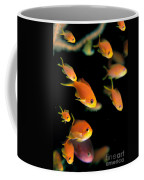 Fiji, Reef Scene Coffee Mug