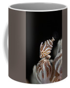 File Fish Coffee Mug