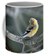 Finch Courtsy Coffee Mug