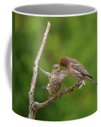 Finch Feeding Time I Coffee Mug