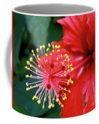Fireworks - Hibiscus Coffee Mug