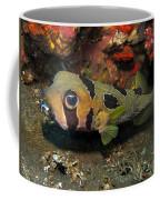 Fish Ball Coffee Mug