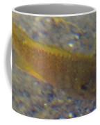 Fish Sandy Bottom Coffee Mug