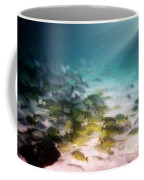 Fish Swim In The Light Coffee Mug