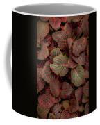 Fittonia Coffee Mug