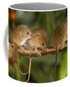 Five Eurasian Harvest Mice Coffee Mug
