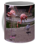 Flamgos 3 San Diego Zoo Coffee Mug