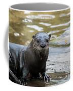 Flamingo Gardens - Curious Otter Coffee Mug