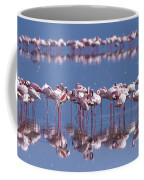 Flamingo Reflection - Lake Nakuru Coffee Mug
