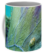 Flamingo Tongue Coffee Mug