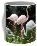 Flamingos 8 Coffee Mug