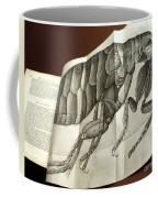 Flea From Robert Hookes Micrographia Coffee Mug