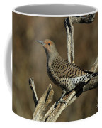 Flicker On Cedar Coffee Mug