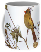 Florida Cardinal Coffee Mug