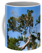 Florida Cedar Tree Coffee Mug